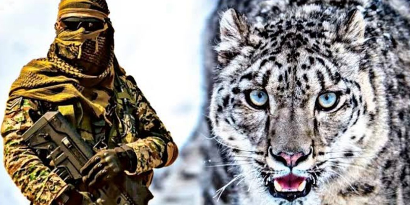 Operation Snow Leopard